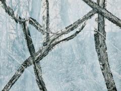 Philip Loersch – Kleine Waldrechnung, 2010