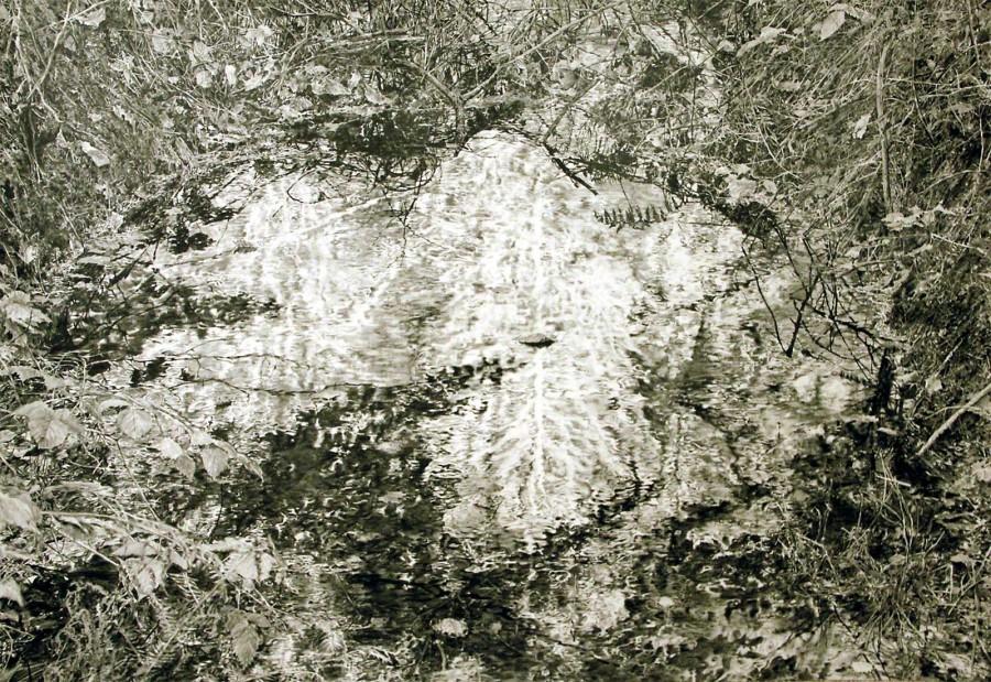 Weißer Baum, 2015
