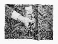 Philip Loersch – Waldstifte 1, 2012
